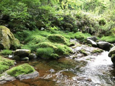 高原 川遊び 川の流れ 苔