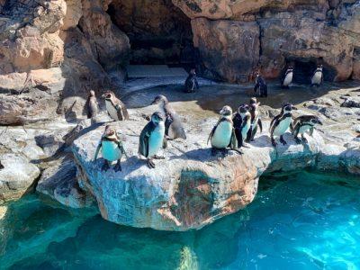 夏休み 子供 体験 水族館 ペンギン