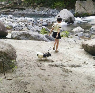 川遊び 犬 お出かけ