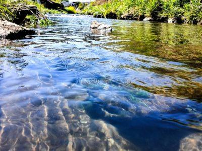 神戸 川遊び 小川 きれいな水