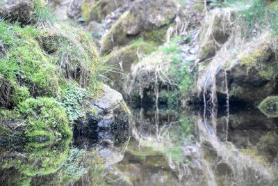 静岡 川遊び 穴場 樹海