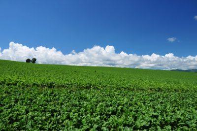 ホテル グリーン プラザ 上越 風景 自然 緑