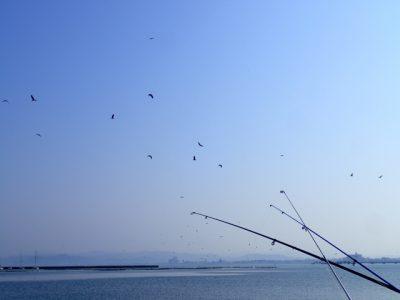 那須高原 川遊び 釣り 鳥