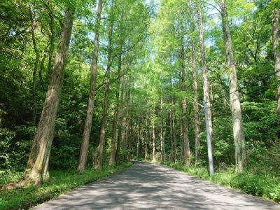 石川 川遊び スポット 森林公園