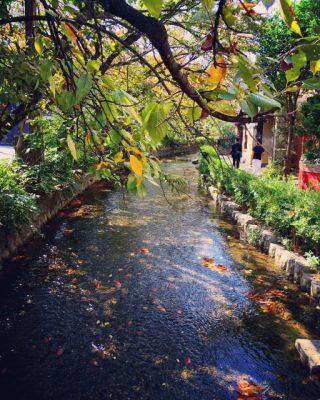 京都 川遊び 紅葉