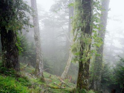 愛媛 川遊び 霧の森