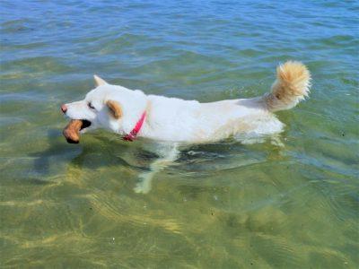 ペット 川遊び 犬 ボール くわえる