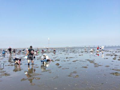 夏休み 子供 体験 潮干狩り 海