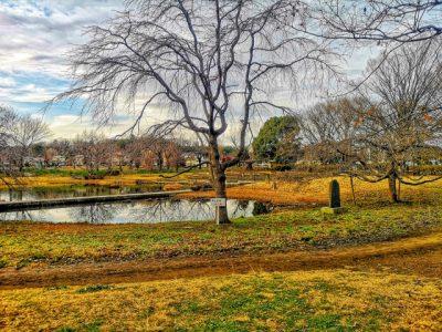 水遊び場 清瀬 枯れ木