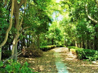 柏崎 キャンプ こども自然王国 森林