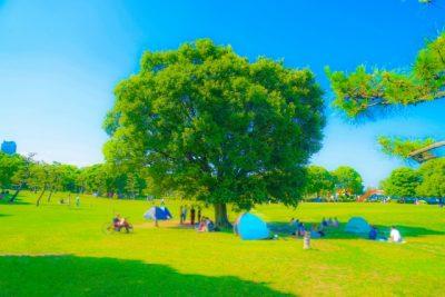 関西 子供 公園 大きな木